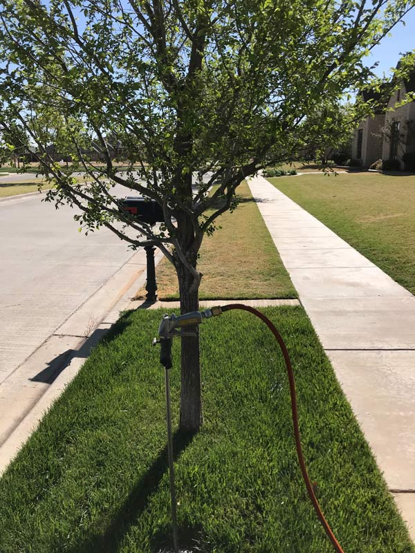 tree treatment lubbock