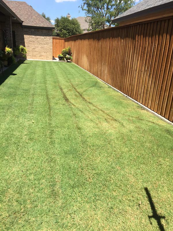 lawn fertilizing lubbock